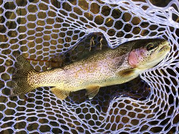 Ararat River Delayed Harvest Trout Waters