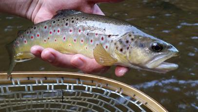 Delayed Harvest Trout Fishing Big Elkin Creek