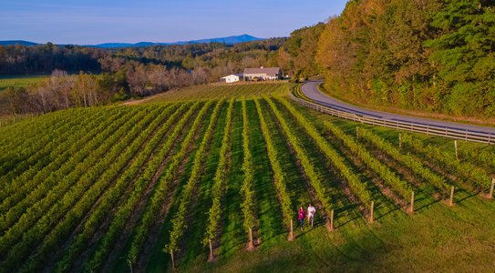 Golden Road Vineyards Yadkin Valley Surry County NC
