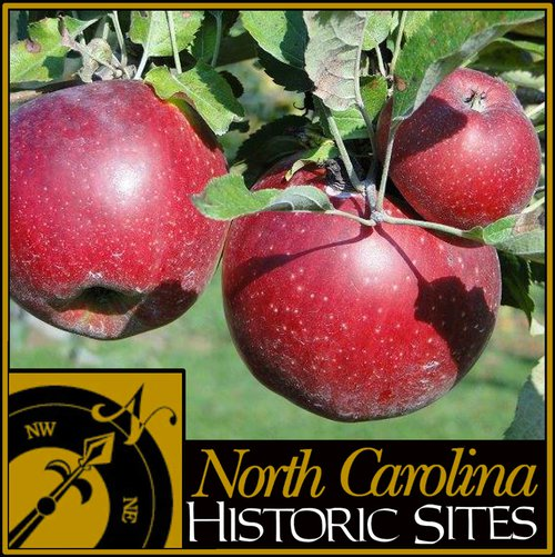 Horne Creek Farm apples Yadkin Valley NC