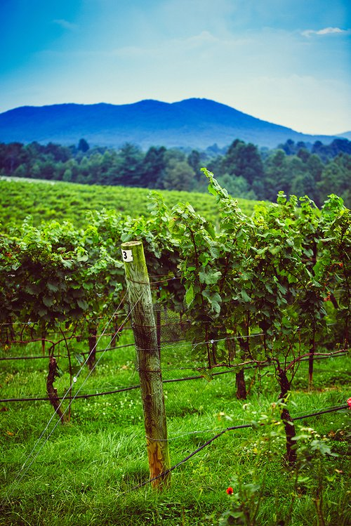 NC Yadkin Valley terroir at Round Peak Vineyards
