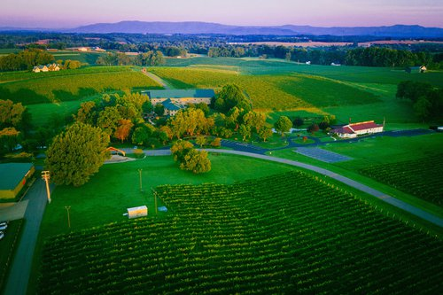 Shelton Vineyards in Dobson NC, Yadkin Valley