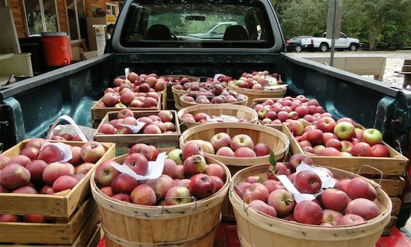 horne_creek_apples.jpg