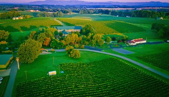 Shelton Vineyards