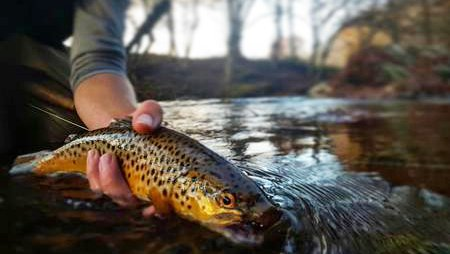 The Experience Fly Fishing Service